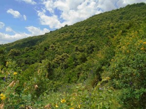 фото: Митко Спироски, Лешок, 15 јуни 2016, Поглед на расцветаниот костен на Шар Планина од Лешочкото кале