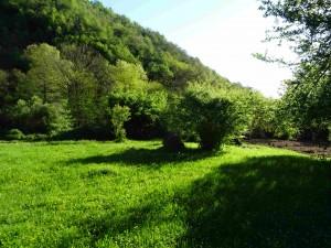 Шар Планина озеленета