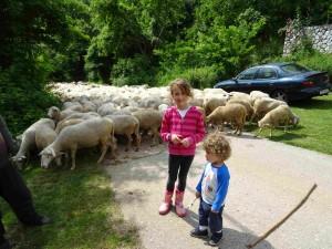 фото: Митко Спироски, Лешок, јуни 2016, Внучињата и овците