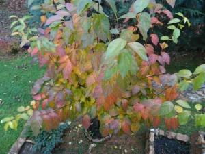 фото: Митко Спироски, октомври 2016, Златна есен во мојот двор во Лешок
