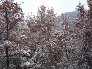 foto: Mitko Spiroski, Lesok, Macedonia, Sneg na Kale